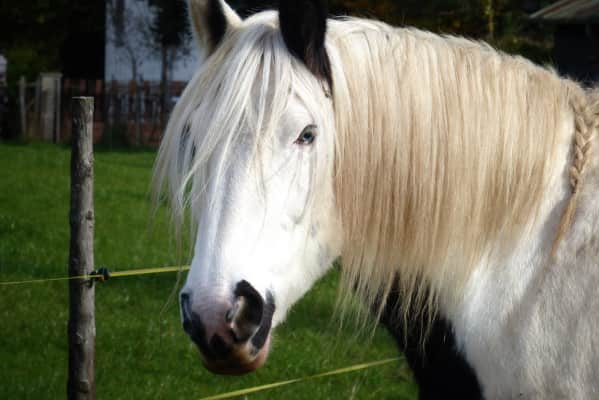 A horse from the neighborhood