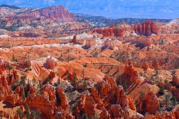 A line of horses walk a trail at Bryce Canyon National Park in Utah.