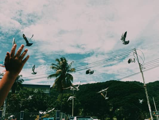 Fly freely