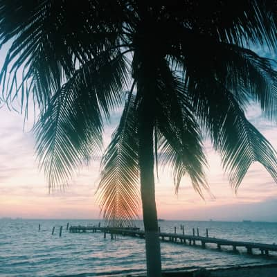 Palm tree sunset by the dock