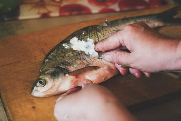 the butchering of the fish