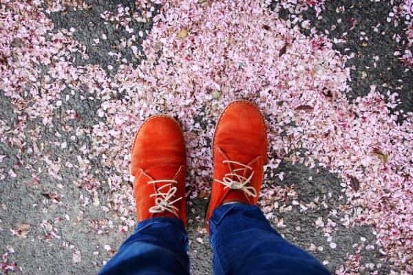 High angle picture of human legs stepping on tree blossom petals fallen on the ground