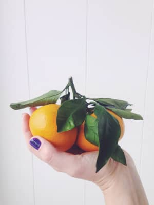 tangerines on a branch in the hand