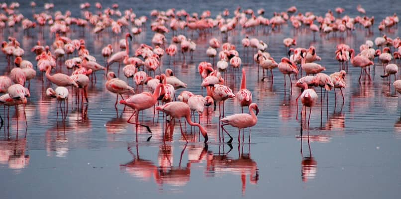 A sea of pink....