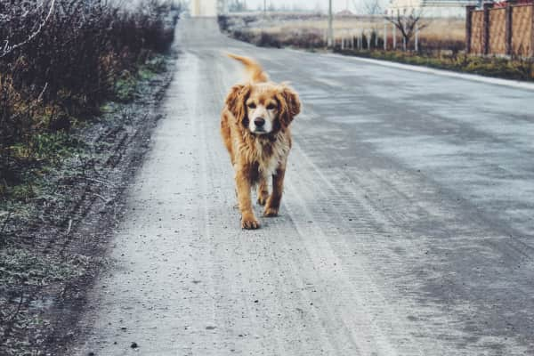 A dog on the road