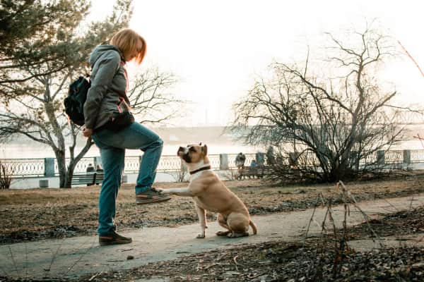 Young woman in the sunny spring park near river is training her staffordshire terrier dog at evening while sunset.