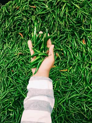 Handful hot Green Chillies to spice up your life