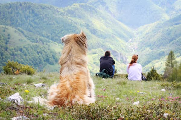 Man and woman sitting on the mountain and dog watching them