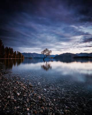 That wanaka tree.... New Zealand