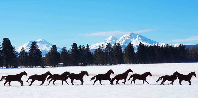 Wild horses and mountains