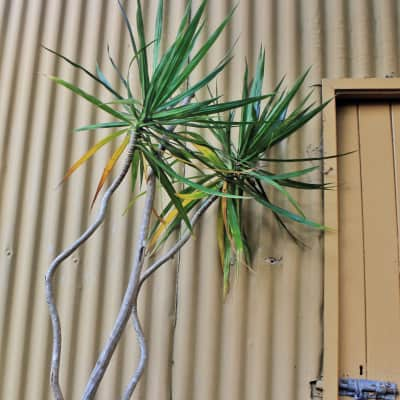 Garden shed and Palms