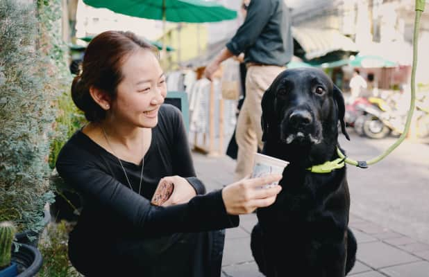 Woman feed the dog