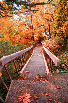 Autumn Steps colorful leaves. RLTheis