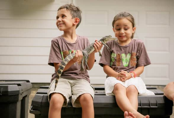 Boy holding a baby alligator