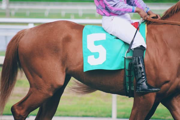 Thoroughbred horse racing competition close up side view of jockey and horse