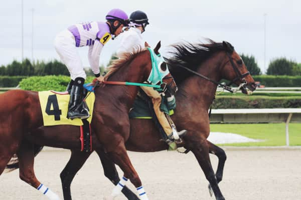 Thoroughbred horse racing competition