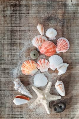 Seashells on wooden background. Many kinds of shells from sea. Souvenir from summer vacation