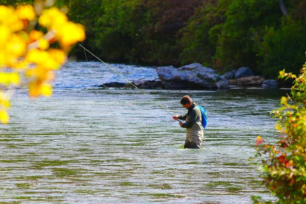 Fly fisherman in waders casting line in the cold Provo, River, on a beautiful fall day.