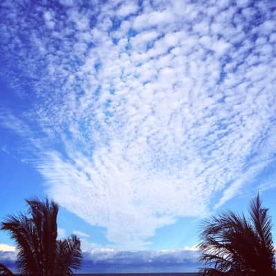 Subliminal strikingly beautiful white puffy clouds, blue sky and palm trees.