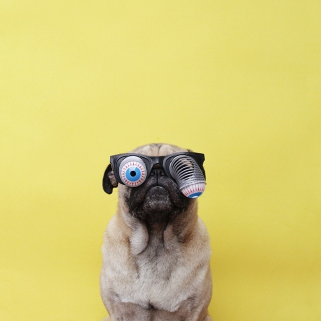 stock-photo-animal-dog-eye-nose-mouth-pet-eyeball-pug-ears-145c17e9-5fb2-49cd-b99b-5667623b54d9.jpg