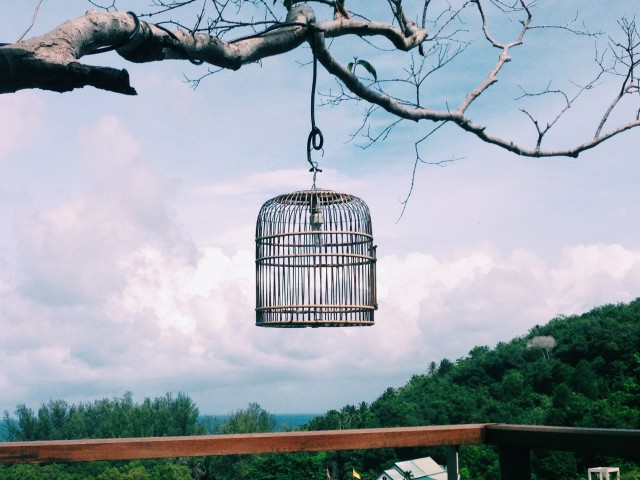 Birdcage hanging on tree branch