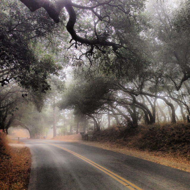 Morning Run.  #santabarbara #rosario #fog