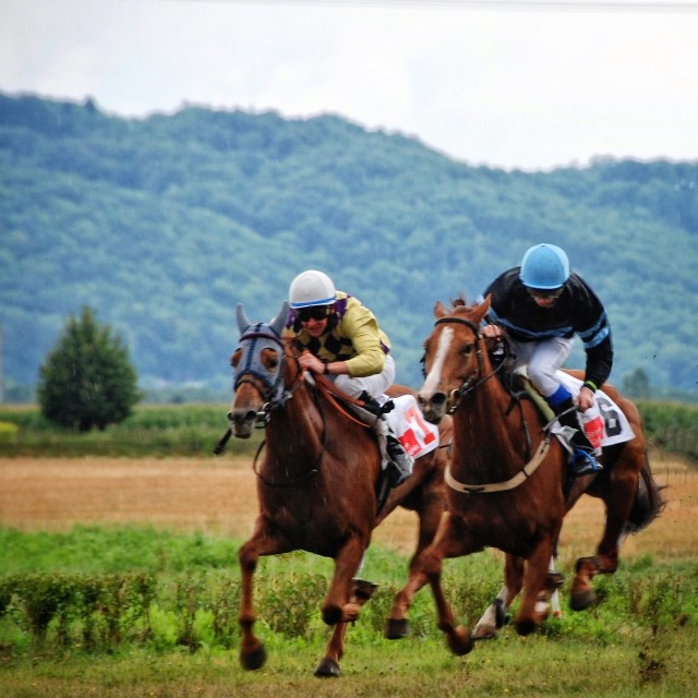 horserace today