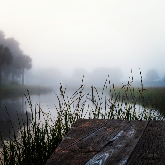 Free authentic lake of the woods photo on Reshot