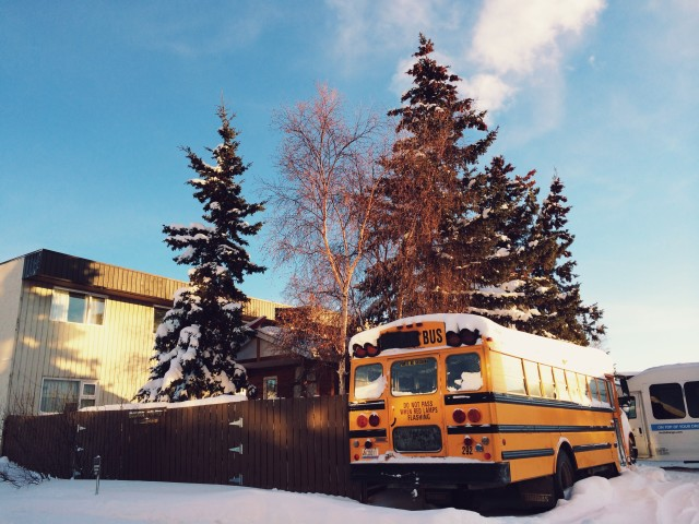 Pine trees and school bus covered with snow