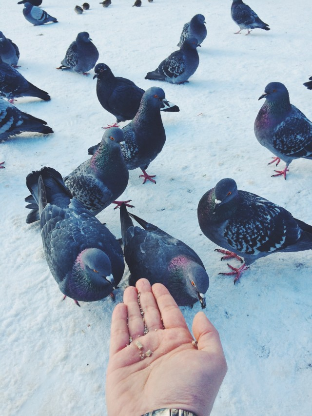 Man feeding pigeons in winter