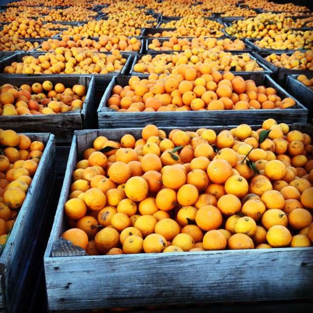 I lived amongst the orange groves of the Alpujarras, great juice!