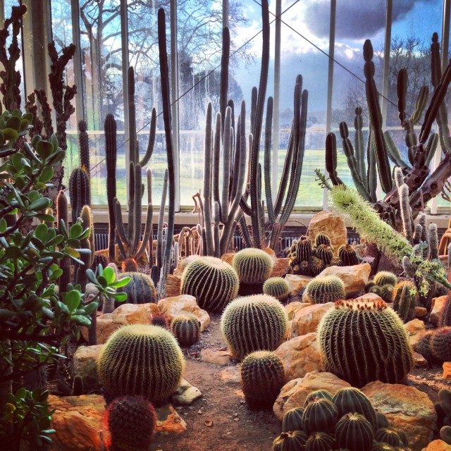 #cactus#nature#plants#botanic#garden#flowers