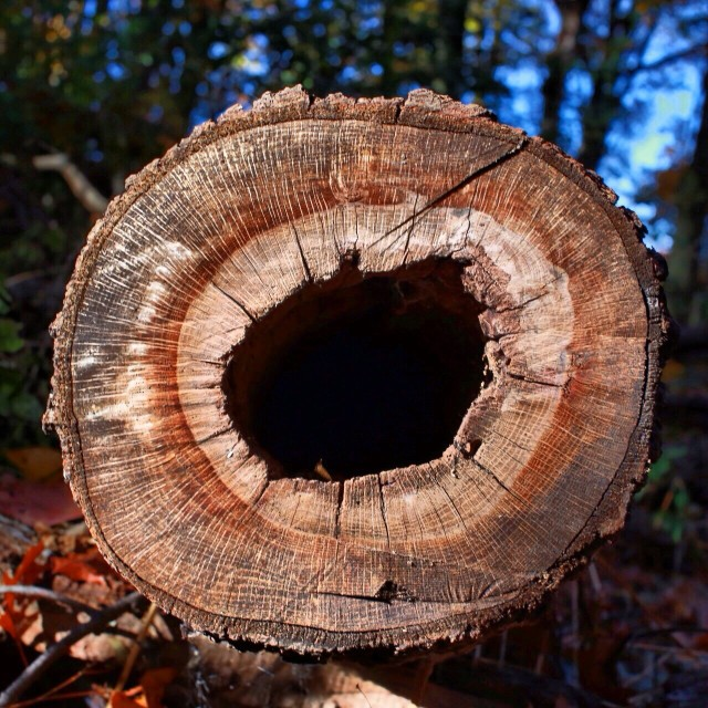 Free authentic log photo on Reshot