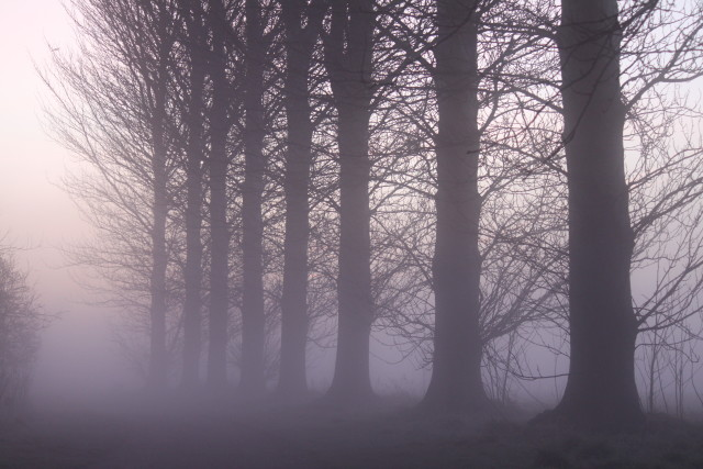 Free authentic fog photo on Reshot