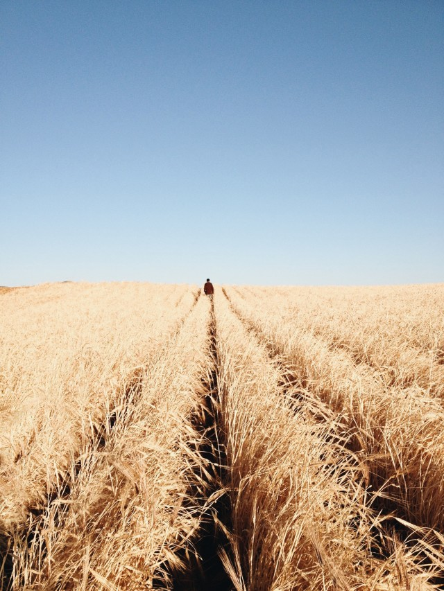 Free authentic wheat photo on Reshot