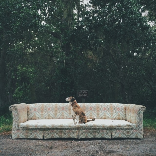 Why not make the dog pose, if all else fails. Found abandoned couch outside Point Lobos State Reserve, south if Carmel on Highway 1.