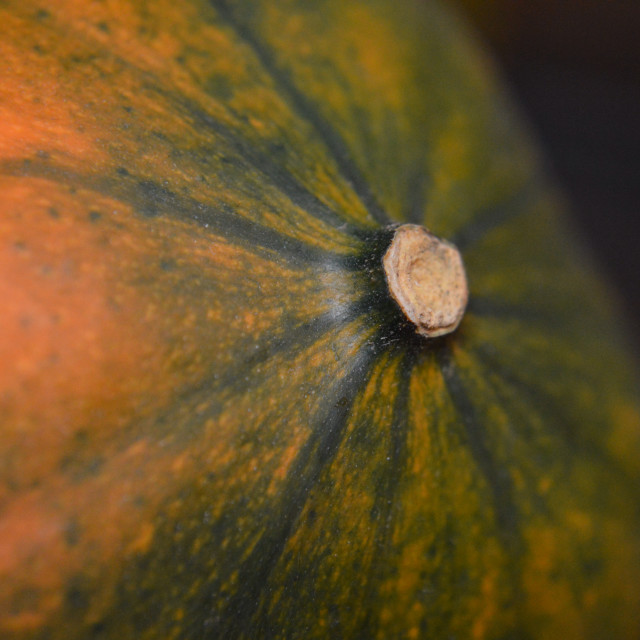 Free authentic squash photo on Reshot