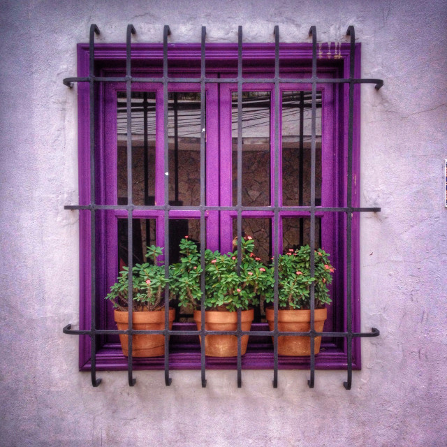 Free authentic potted plant photo on Reshot