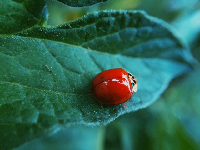 Free authentic bug photo on Reshot