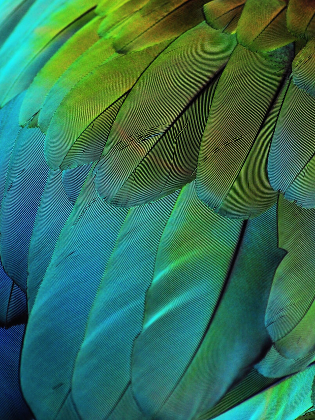 Free authentic feather photo on Reshot