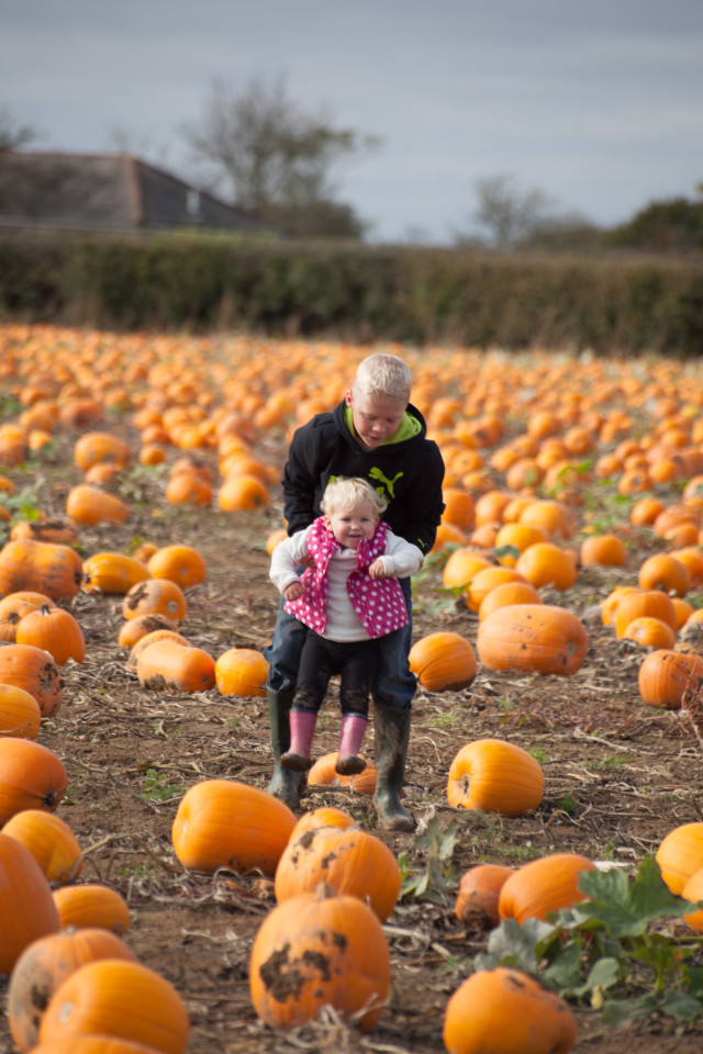 Free authentic pumpkin photo on Reshot