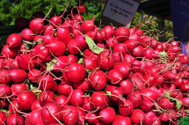 Radish red at the farmers market