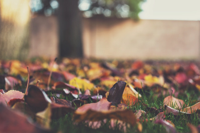 Fall Leaves on the Ground shallow depth of field
