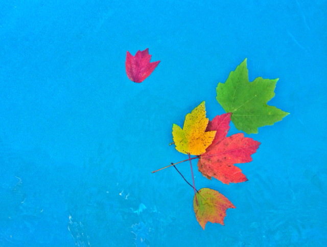 Free authentic fall leaves photo on Reshot