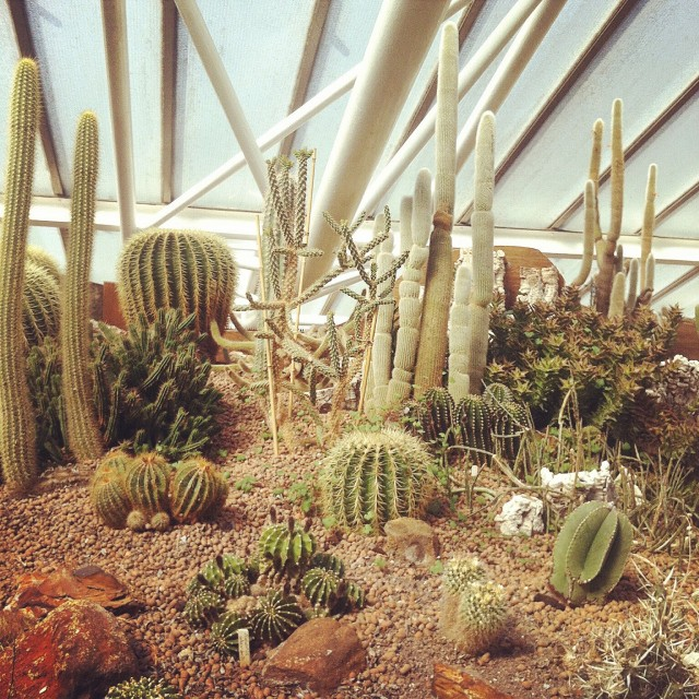 Free authentic cacti photo on Reshot