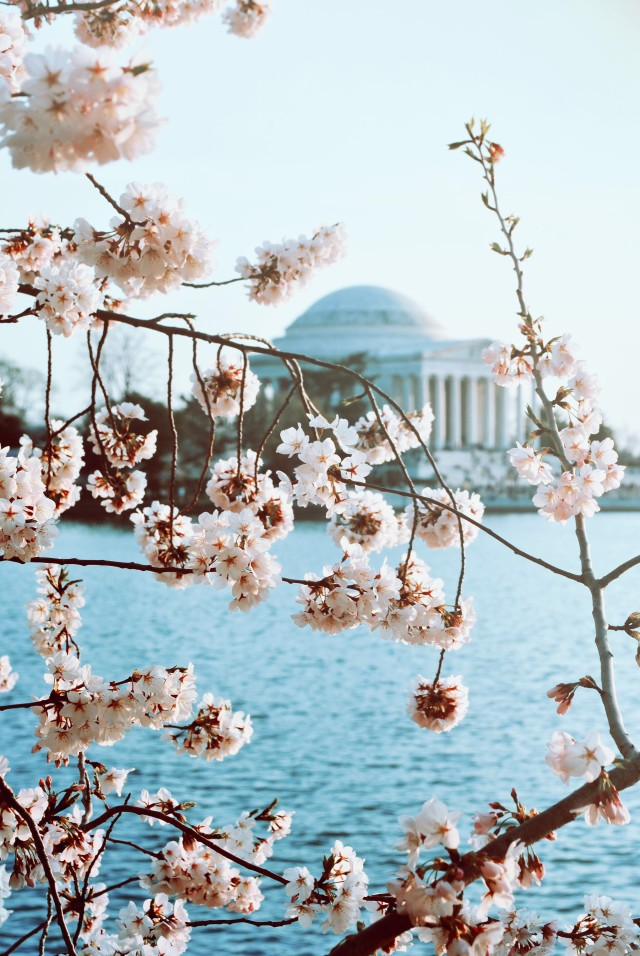 Free authentic blossom photo on Reshot