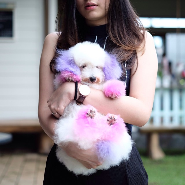 Free authentic cute doggy photo on Reshot