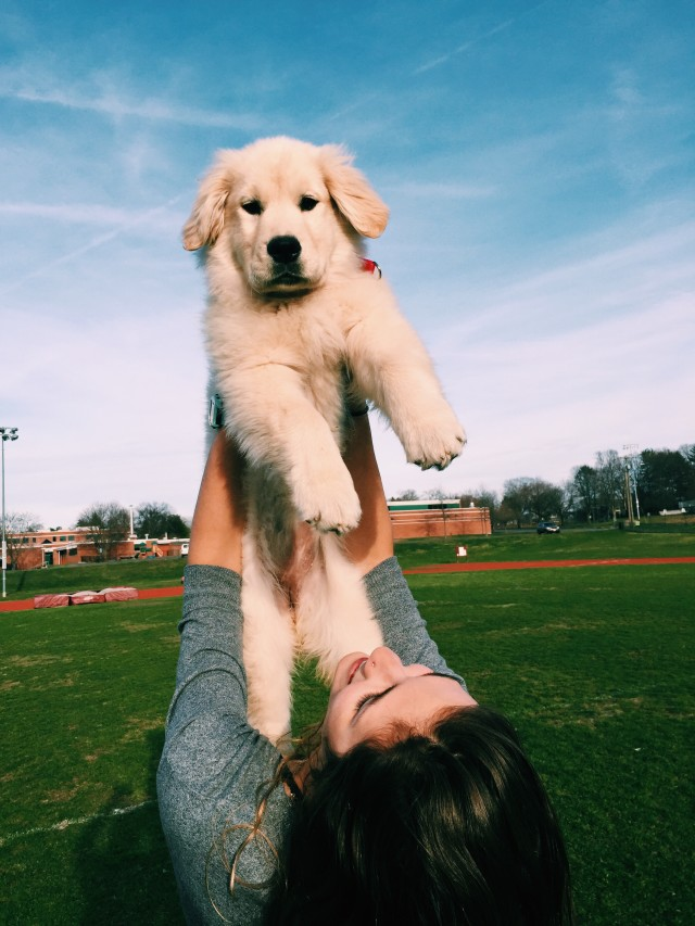 Puppy love is the only love