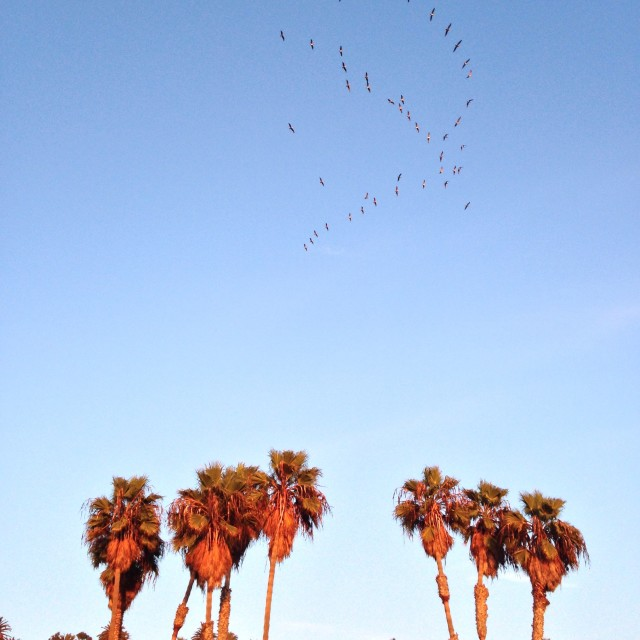 Palm trees and birds