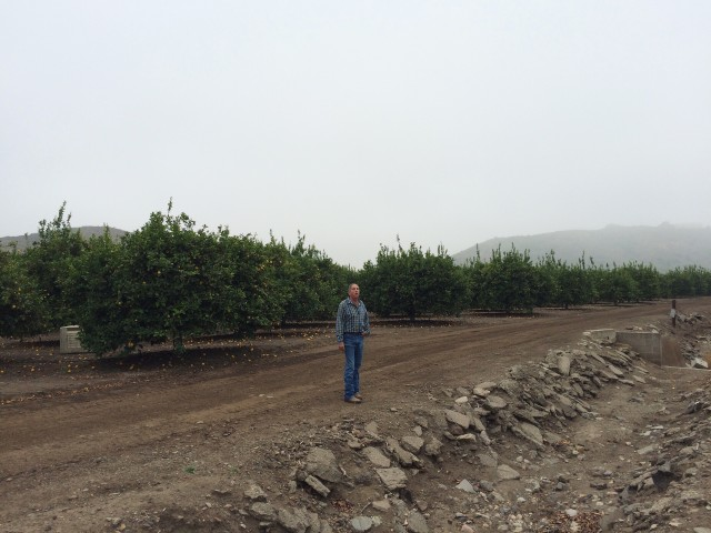 Free authentic orchard photo on Reshot